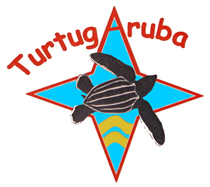 TurtugAruba, Save Aruba Sea Turtle habitats and nests.  Endangered and threatened sea turtle species include the Leatherback, the Loggerhead, the Green and the Hawksbill.