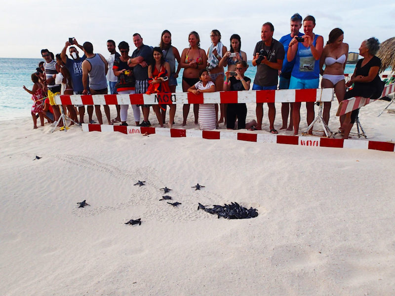 Group of people watch as hatchlings emerge from their nest